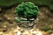 Greenification - avagy zöldítsd az Egyetemet!